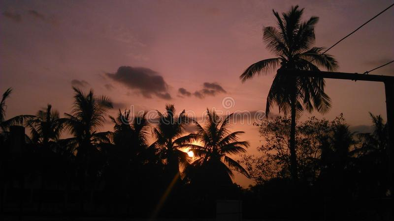 与棕榈树的五颜六色的晚上 免版税库存照片