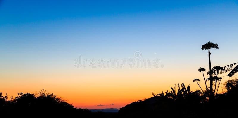 与棕榈树的五颜六色的橙色日落 免版税库存照片