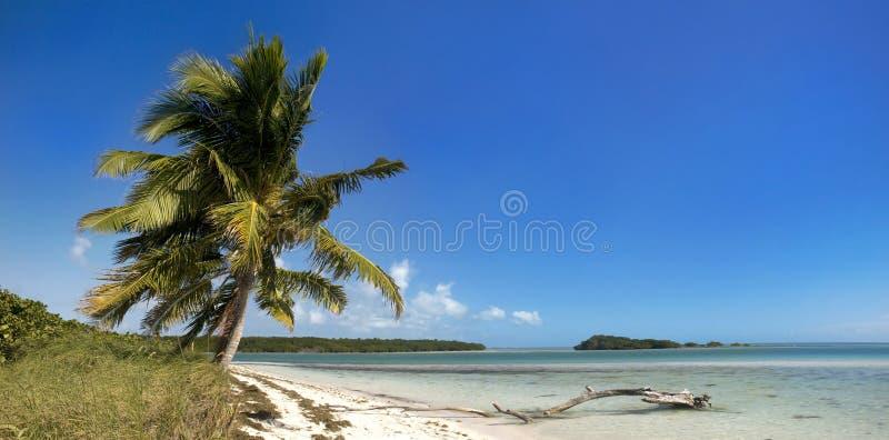 与棕榈树的夏天全景横向 免版税库存照片