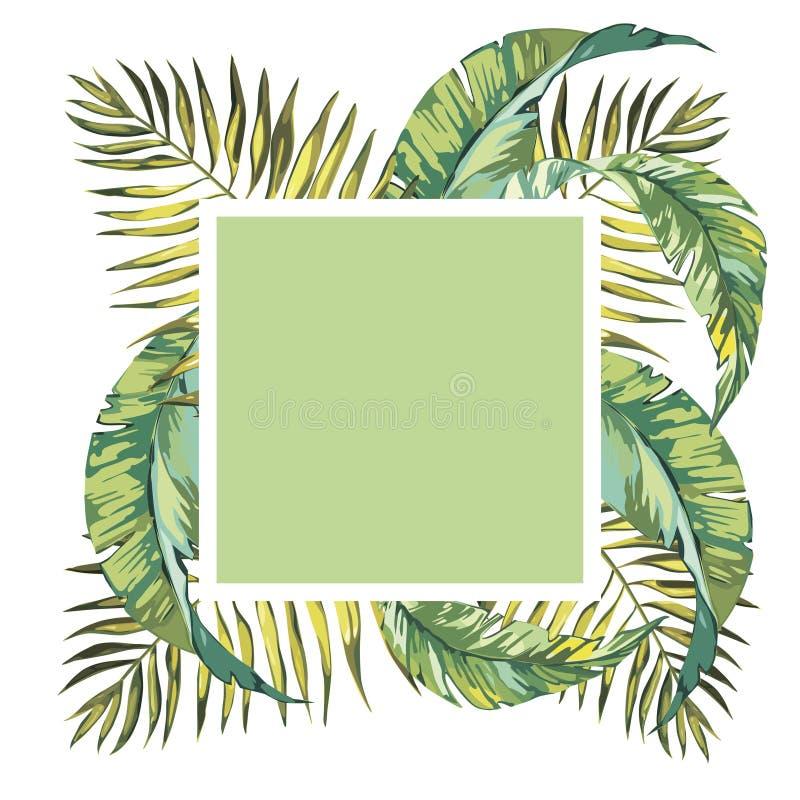与棕榈树的夏天热带背景离开和异乎寻常的植物,夏天海报 羽毛花 10 eps 皇族释放例证