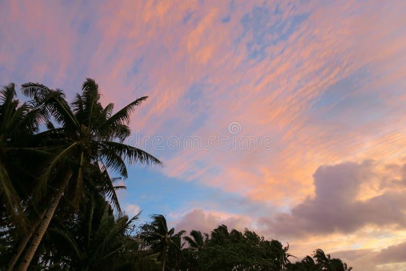 与棕榈树的桃红色热带日落天空 库存照片