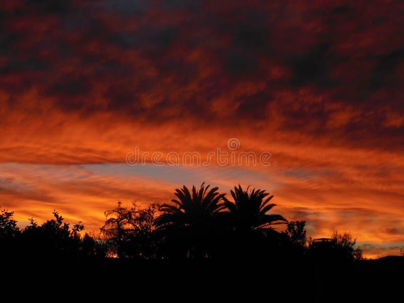 与棕榈树的橙色日落 图库摄影