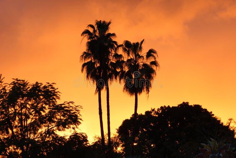 与棕榈树的橙色日落 免版税库存图片