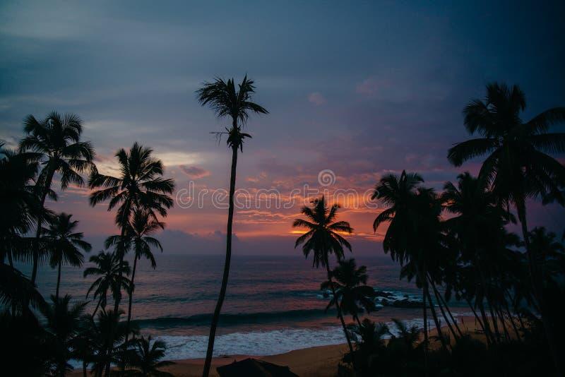 与棕榈树的海景在日落 免版税库存图片
