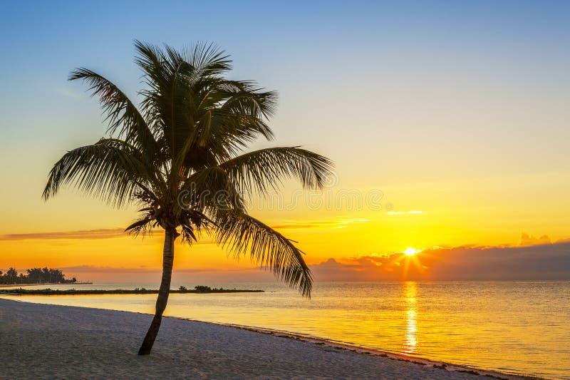 与棕榈树的海滩在日落 免版税库存照片