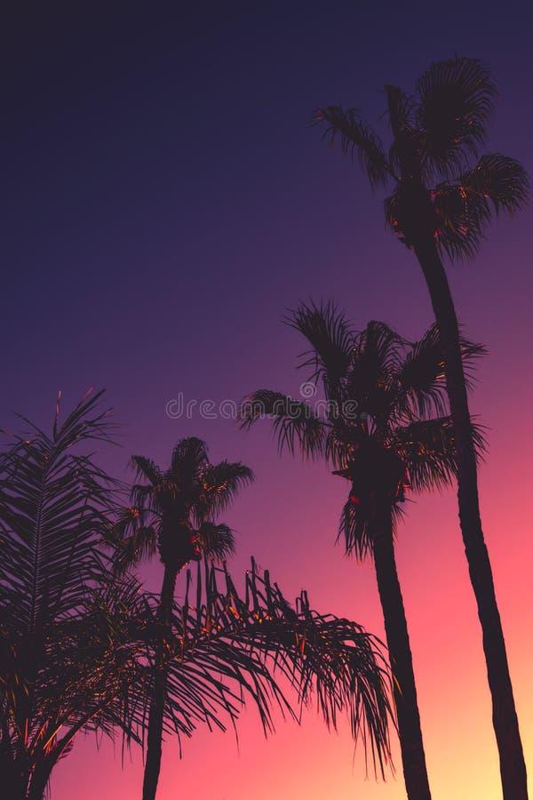 与棕榈树的热带夜背景在日落 免版税库存图片