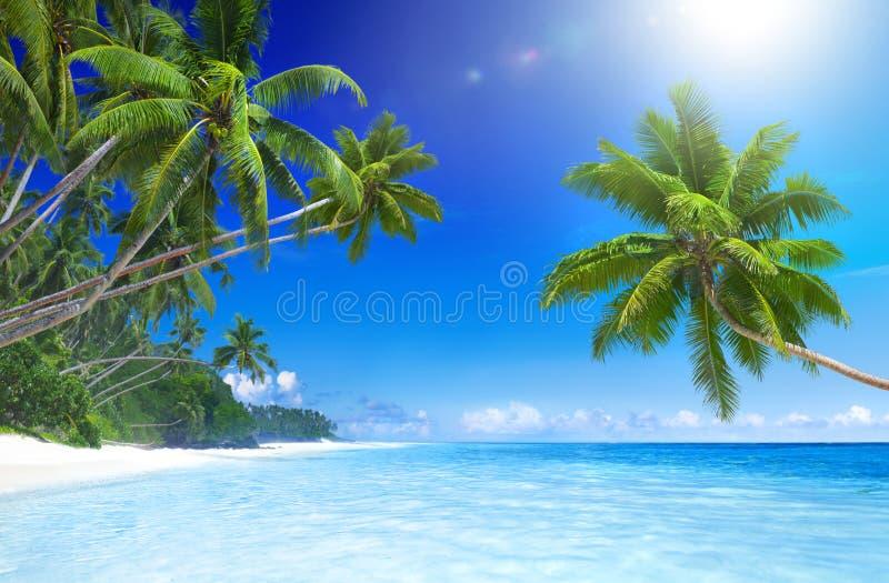 与棕榈树的热带天堂海滩 免版税库存照片