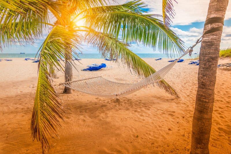 与棕榈树的热带海滩和吊床在一好日子 佛罗里达Fort Lauderdale 库存照片