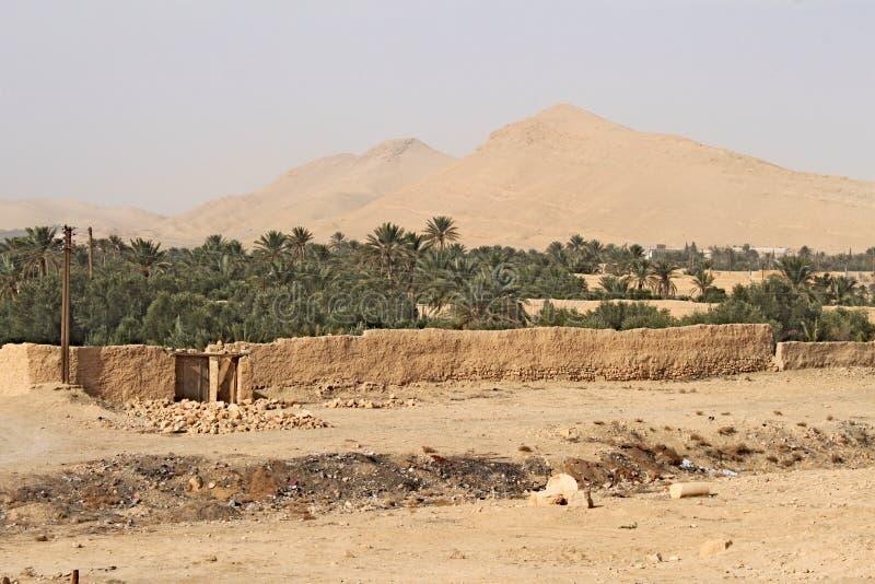 与棕榈树的绿洲在扇叶树头榈-叙利亚沙漠的古城 免版税库存图片