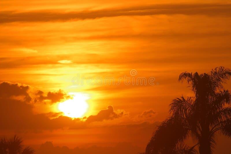 与棕榈树的美丽的金黄毛伊,夏威夷日落 免版税库存图片