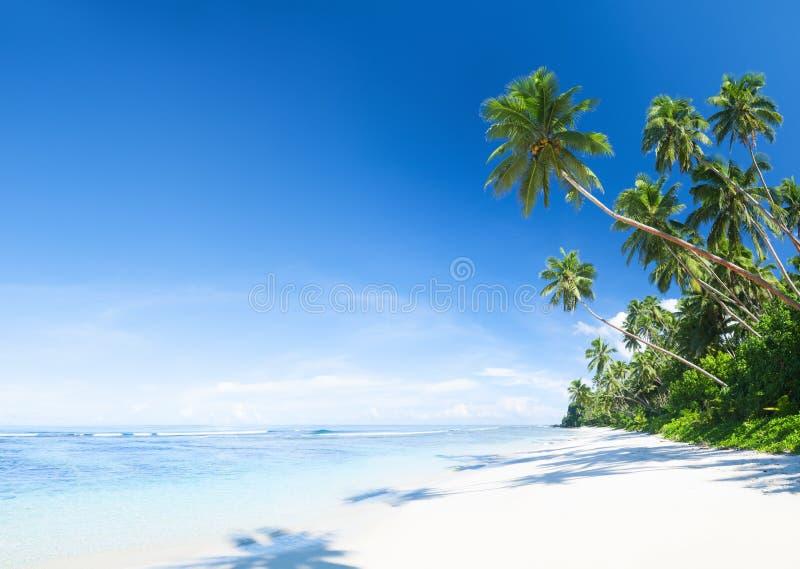 与棕榈树的美丽的风景海滩 库存图片