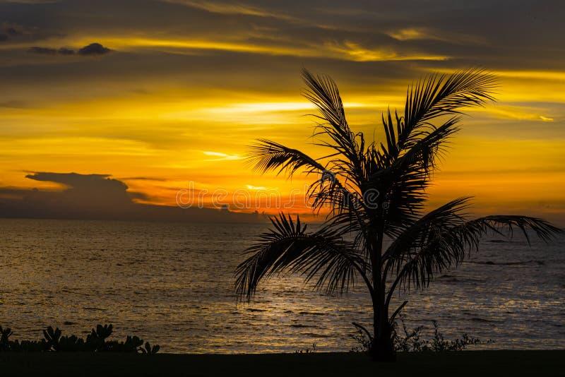 与棕榈树的美好的热带夜风景 免版税库存图片
