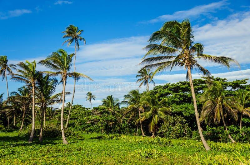 与棕榈树的豪华的热带结算 免版税库存照片
