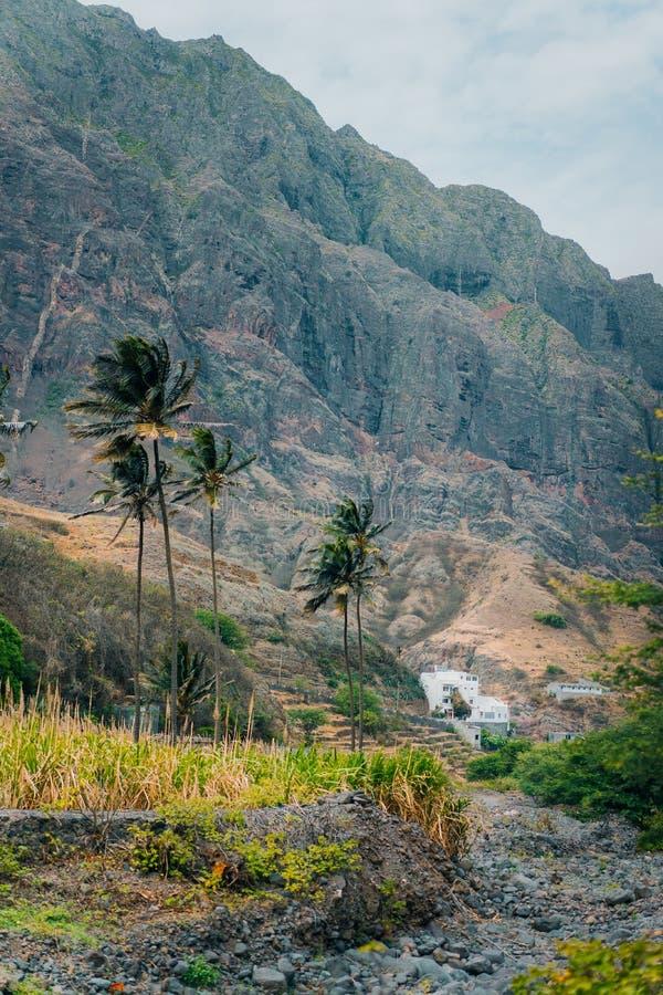与棕榈树的风景反对在保罗谷,圣安唐岛,佛得角海岛的巨大的山  免版税库存图片