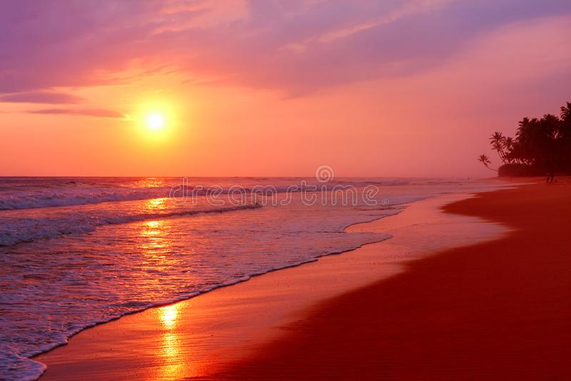 与棕榈树的风景热带海滩在日落背景,斯里兰卡 库存图片