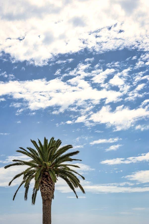 与棕榈树的Cloudscape 库存照片