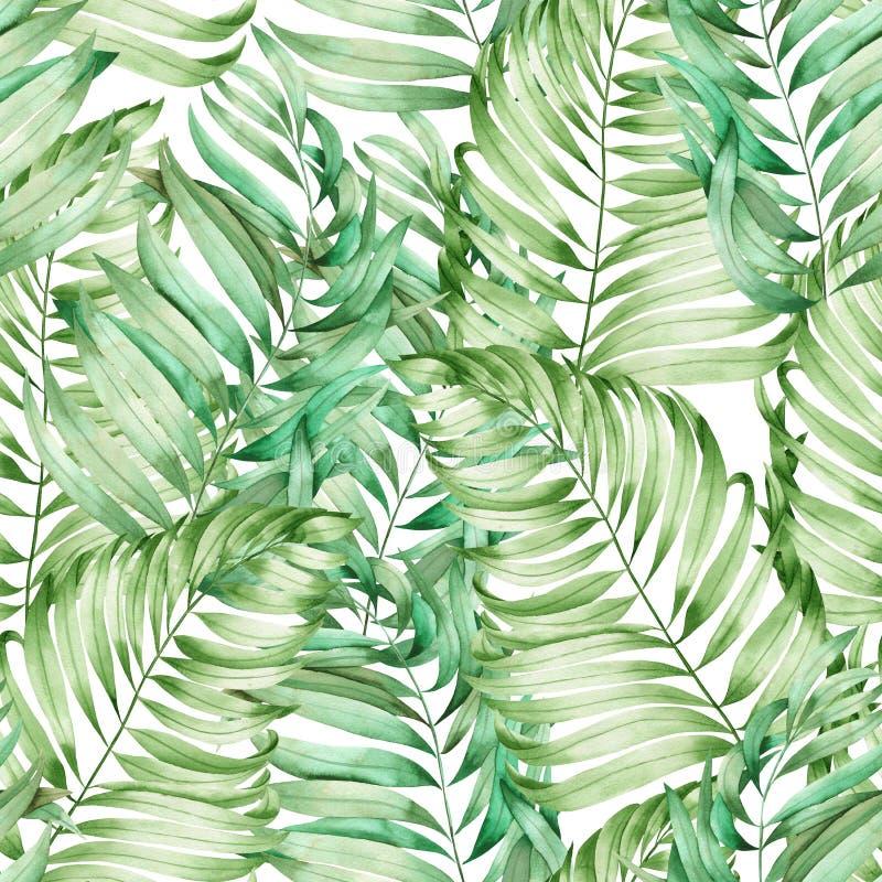与棕榈的叶子的水彩分支的一个无缝的样式在白色背景绘的 皇族释放例证