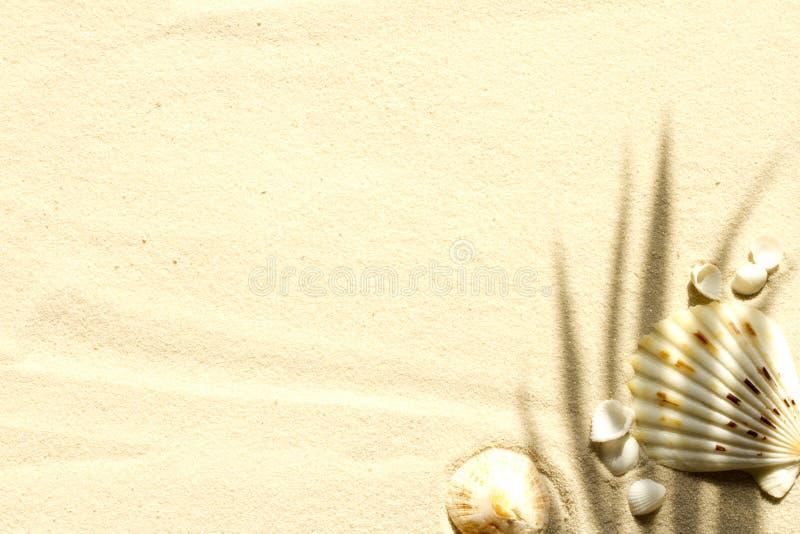 与棕榈的沙滩和壳提取背景 免版税库存图片