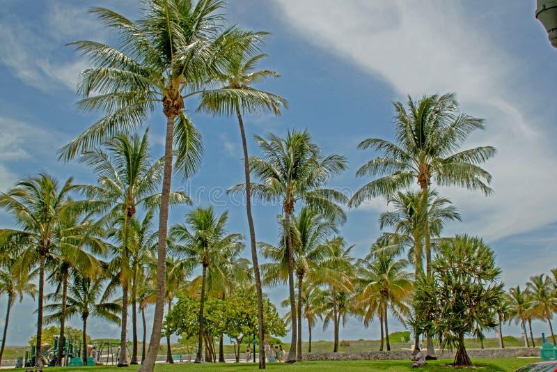 与棕榈的海滩在佛罗里达 库存图片
