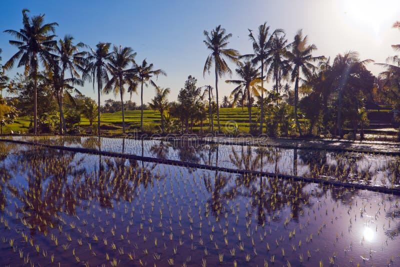 与棕榈的米大阳台 免版税库存图片