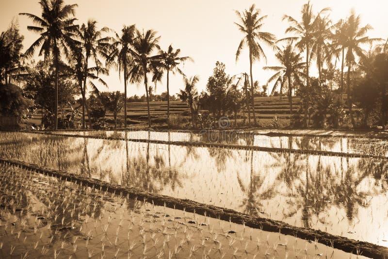 与棕榈的米大阳台 库存照片