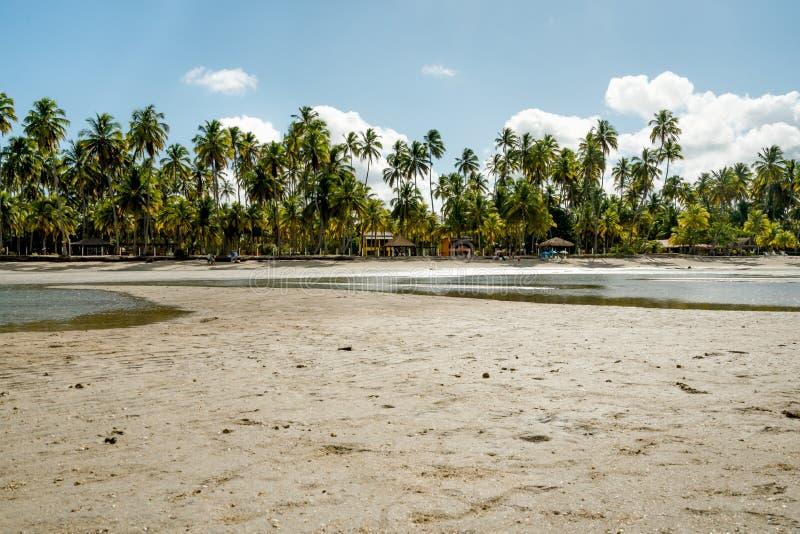 与棕榈的美好的晴天和在天堂的水反射 库存图片