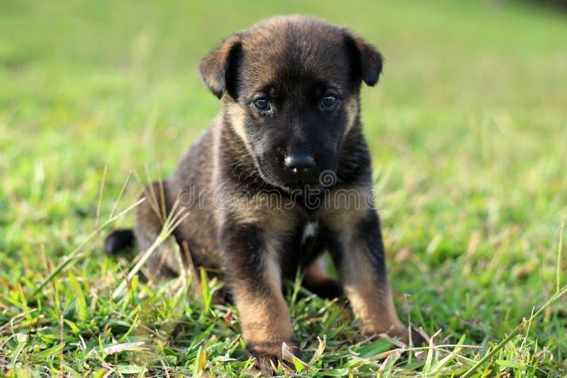 与棕色标号的逗人喜爱的黑小狗 免版税库存照片
