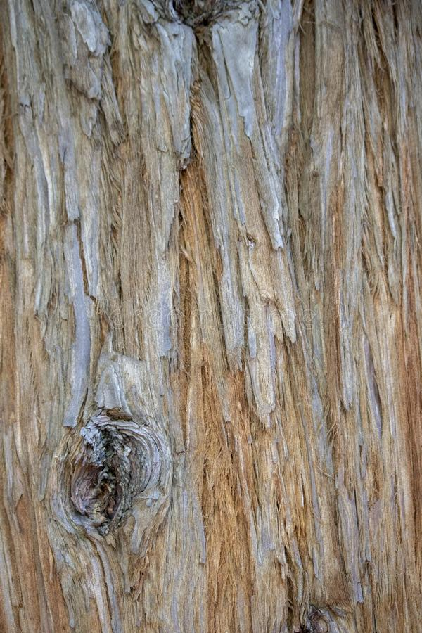 与棕色样式的树皮 It& x27;s得到了一个圆的污点 免版税库存照片