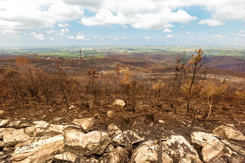 与棕色被烧的山坡的破坏性的灌木火 库存照片