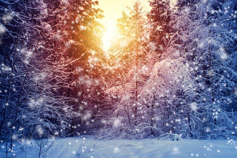 与森林、树和日出的美好的冬天风景 一新的天的winterly早晨 与雪的圣诞节风景 免版税库存图片