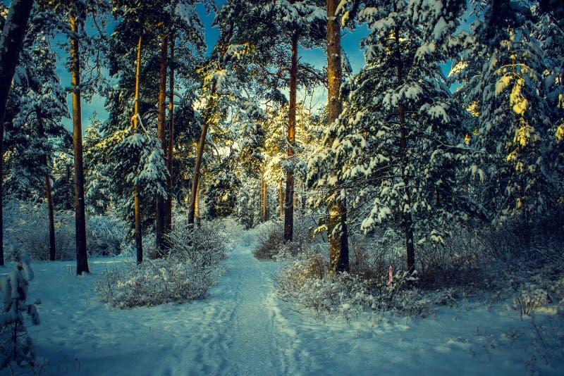 与森林、树和日出的美好的冬天风景 一新的天的winterly早晨 与雪的圣诞节风景 库存照片