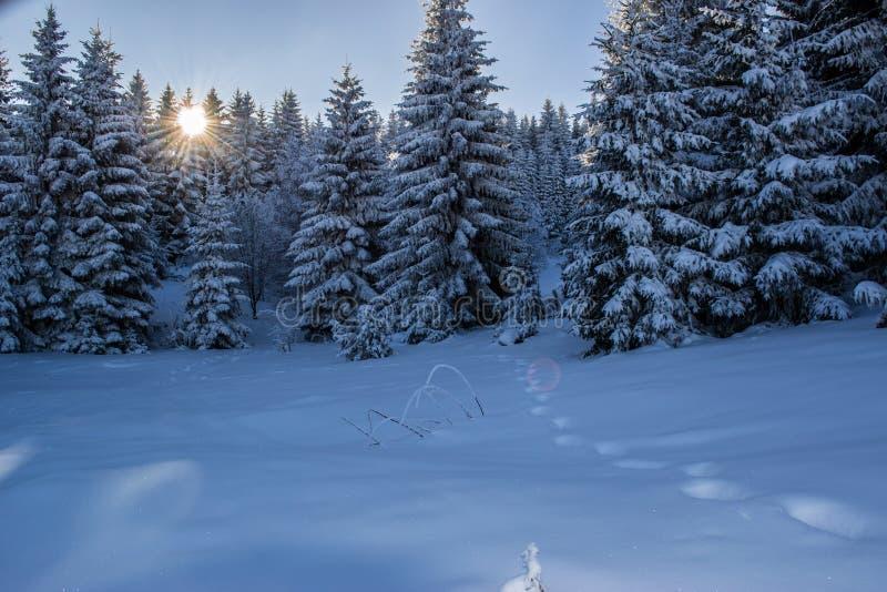 与森林、树和日出的美好的冬天风景 r 与日落的紫色冬天风景 库存照片