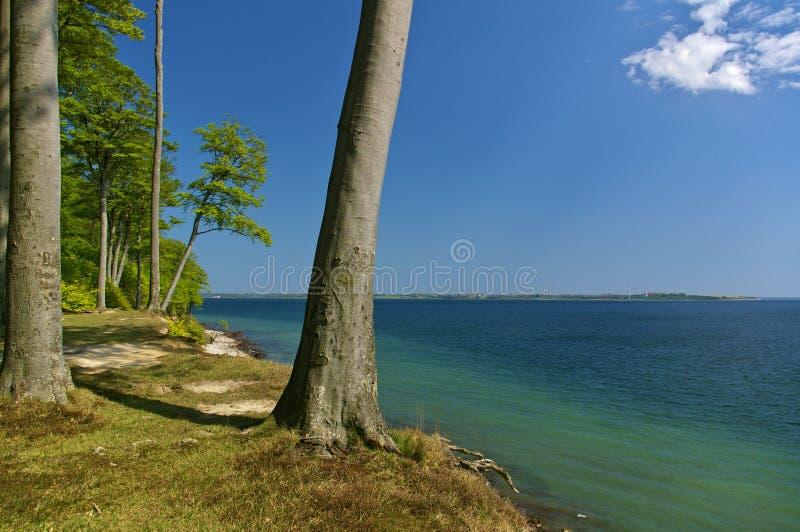 与森林和倾斜的树的Clifftop在海滩上 库存照片