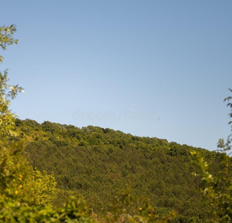 与森林和蓝色的青山,清楚的天空射击了低谷叶子 免版税库存照片