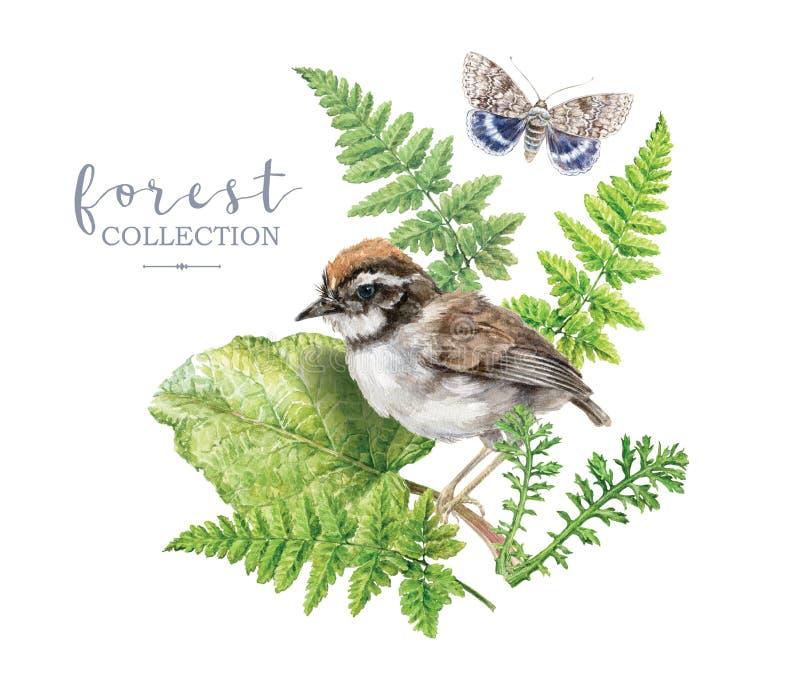 与森林植物和鸟的水彩图象 免版税库存图片