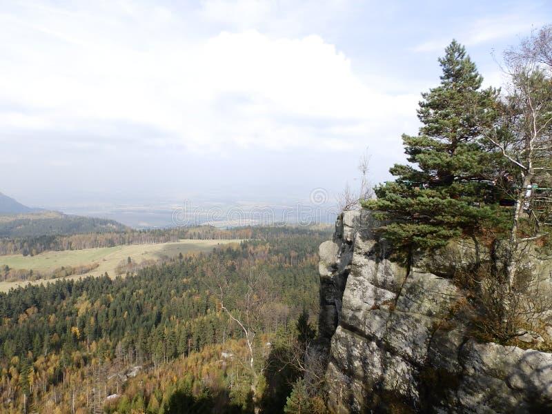 与森林的岩石 免版税库存图片