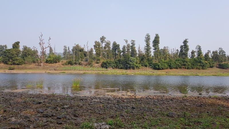 与森林的河流程在后面 免版税库存照片