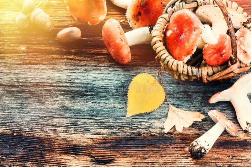 与森林的秋天框架在老木背景采蘑菇 免版税库存照片