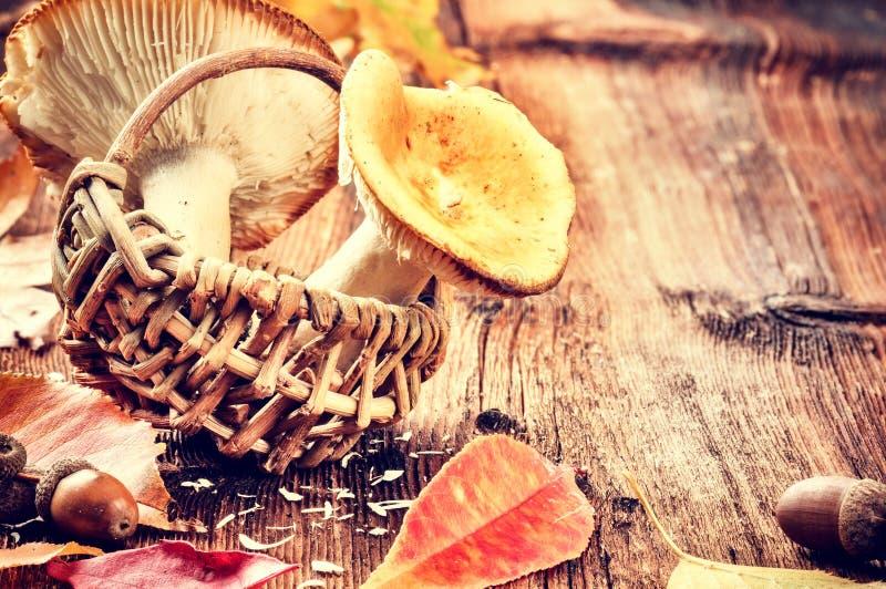 与森林的秋天静物画采蘑菇(红茹属) 图库摄影