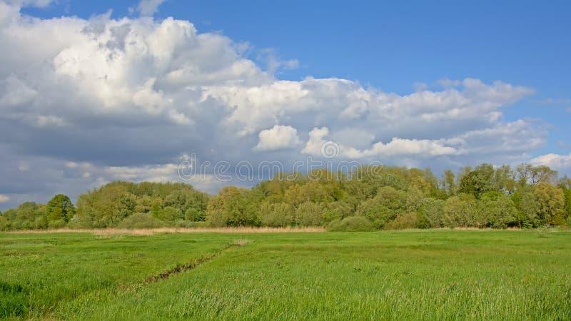与森林的豪华的绿色晴朗的春天沼泽地风景在背景中 免版税库存照片