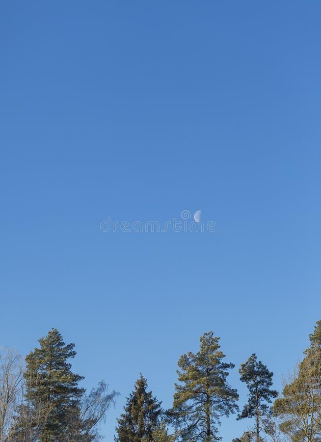 与森林的风景和月亮和天空蔚蓝 免版税库存照片