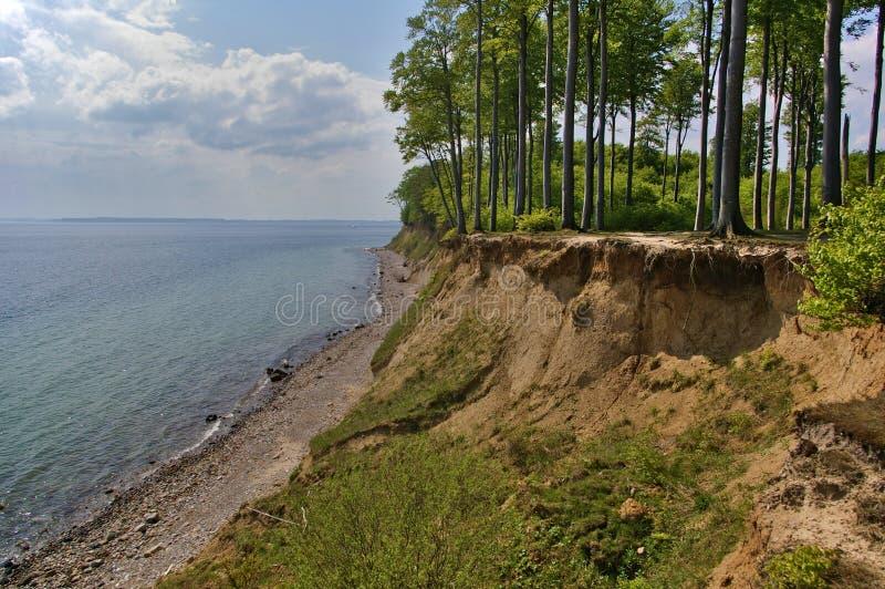 与森林的Clifftop在海滩上 图库摄影