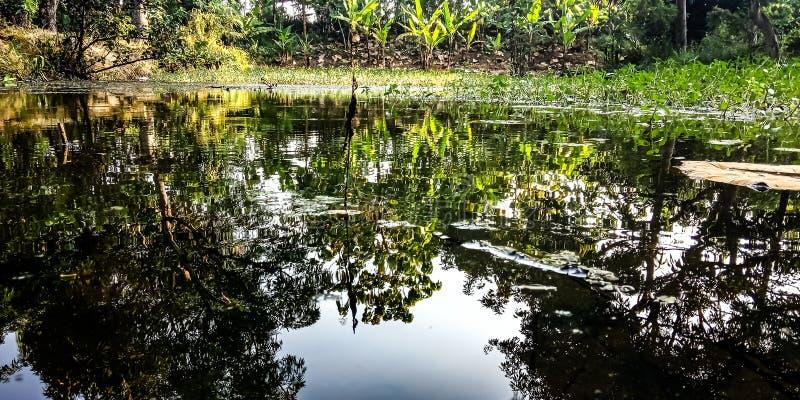 与植物、无头甘蓝植物和香蕉庭院的阴影的水 免版税库存图片