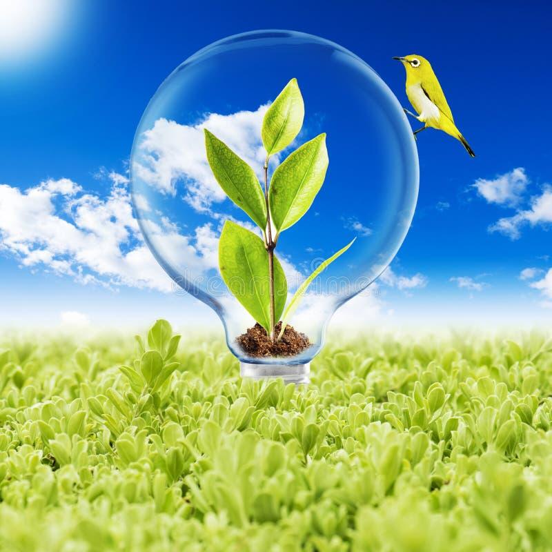 与植物和鸟的电灯泡 向量例证