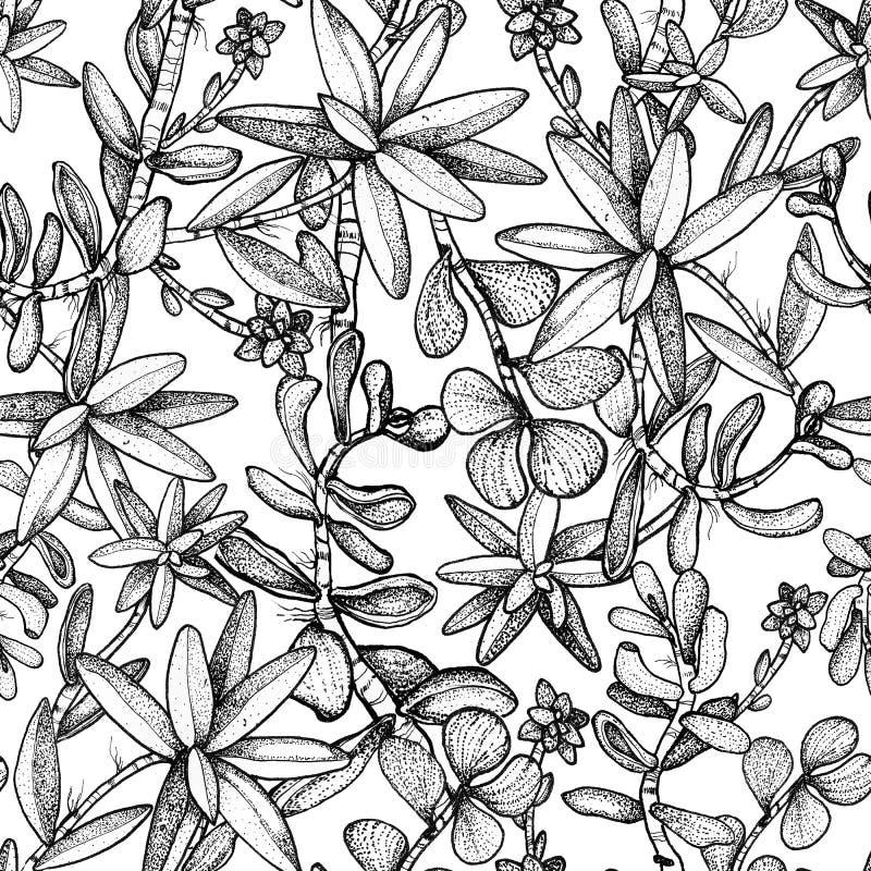 与植物多汁植物的手拉的无缝的样式 库存例证
