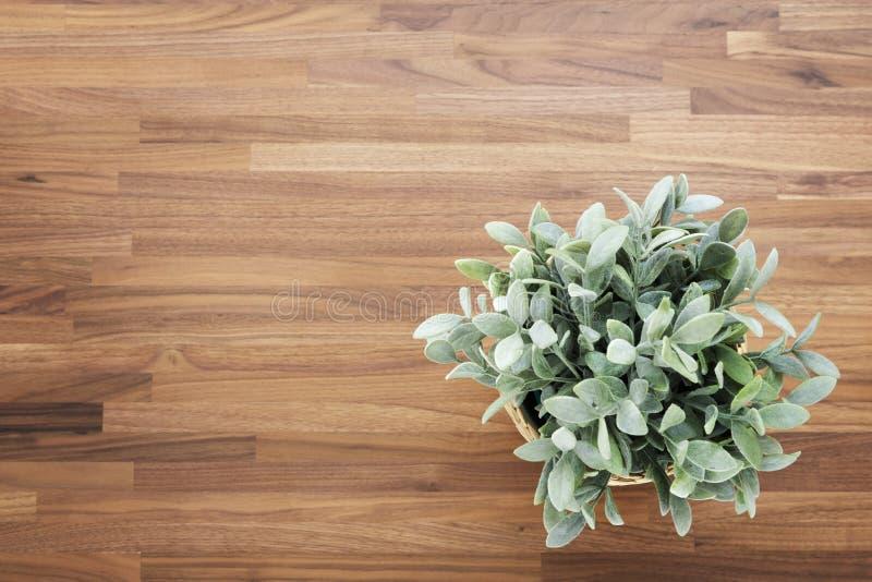 与植物的木书桌背景 库存图片