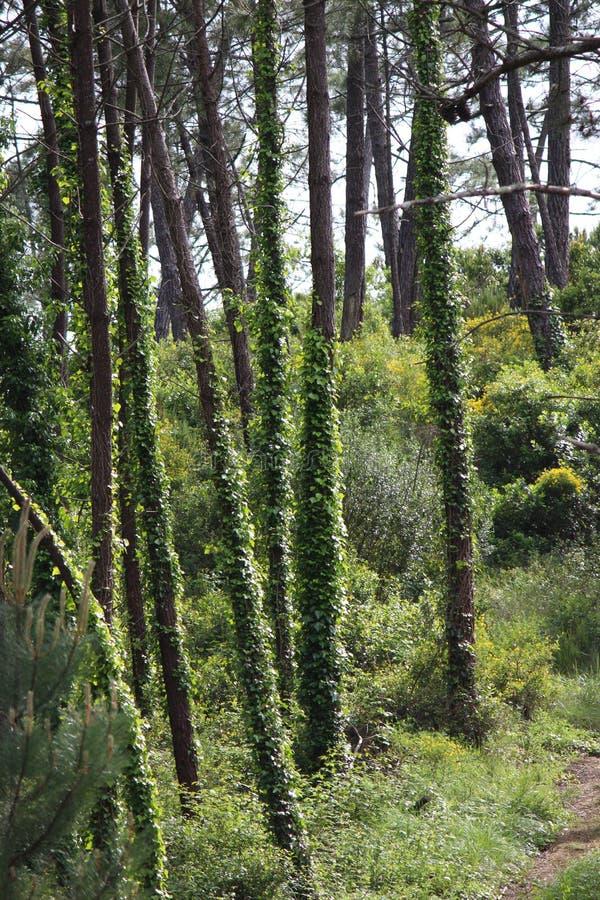 与植物的树 免版税库存图片