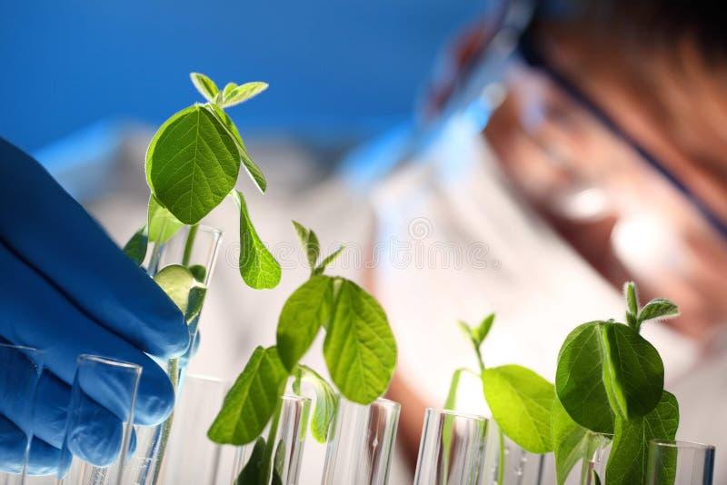 与植物的科学家审查的样品 免版税库存照片