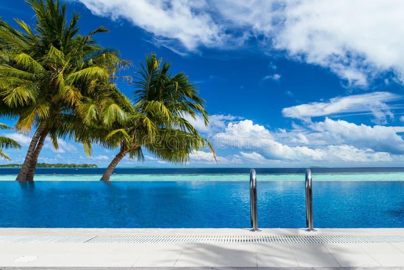 与椰子树的无限水池 库存照片