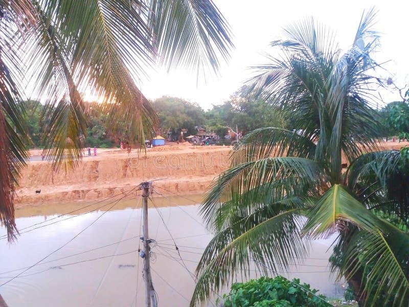 与椰子树的自然摄影 库存图片